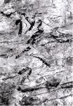発見された石材のイラスト図